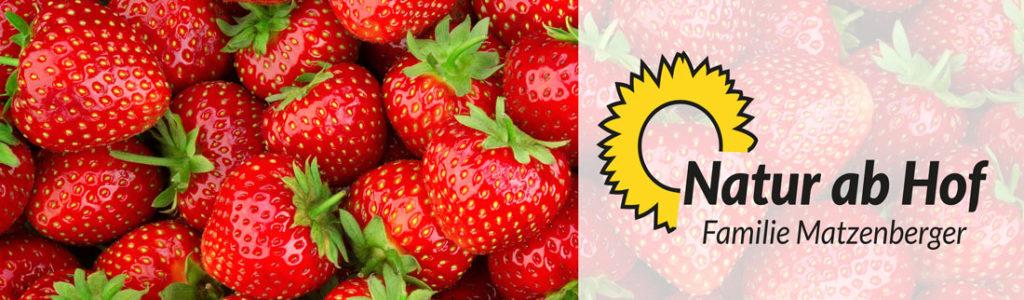 Bio-Erdbeeren der Familie Matzenberger