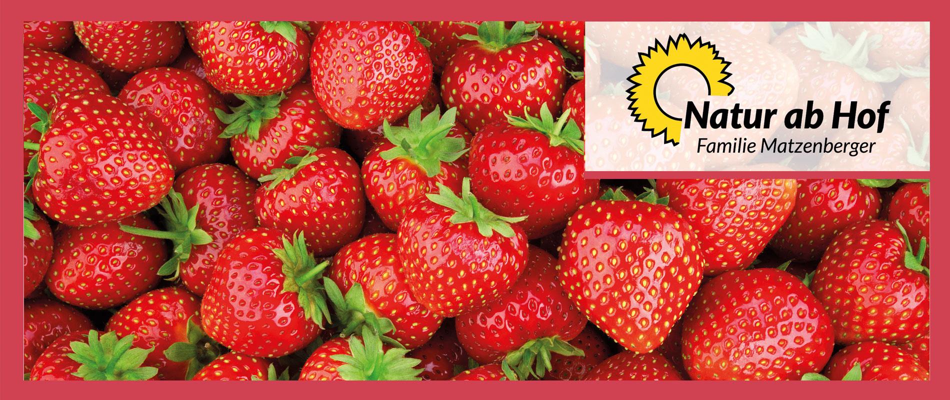 BIO-Erdbeeren zum Selberpflücken