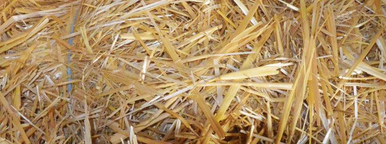 Foto geschnittenes Stroh aus dem Mostviertel